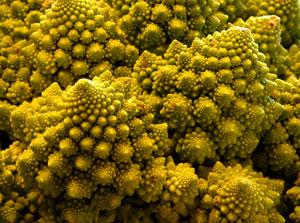Fractals like this one exhibited by the Romanesco cauliflower could help explain the wackiness of quantum theory (Image: fishmonk / stock.xchng)